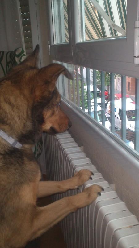 cotilleando por la ventana