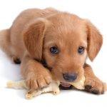 ¿Cómo afrontar los primeros días de un cachorro en nuestro hogar?