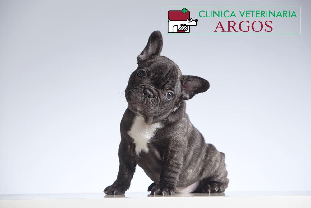 veterinarios Albacete