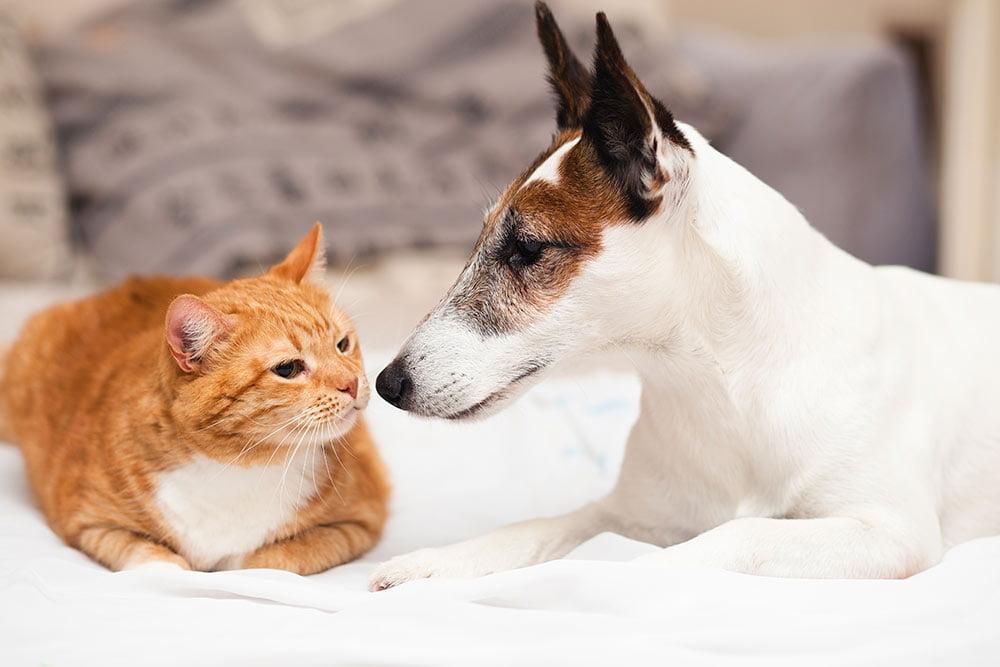 cuidado de tu mascota | Veterinario Argos
