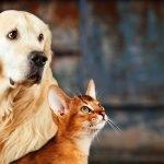 ¿Cuales son los accidentes más habituales que puede sufrir tu mascota?