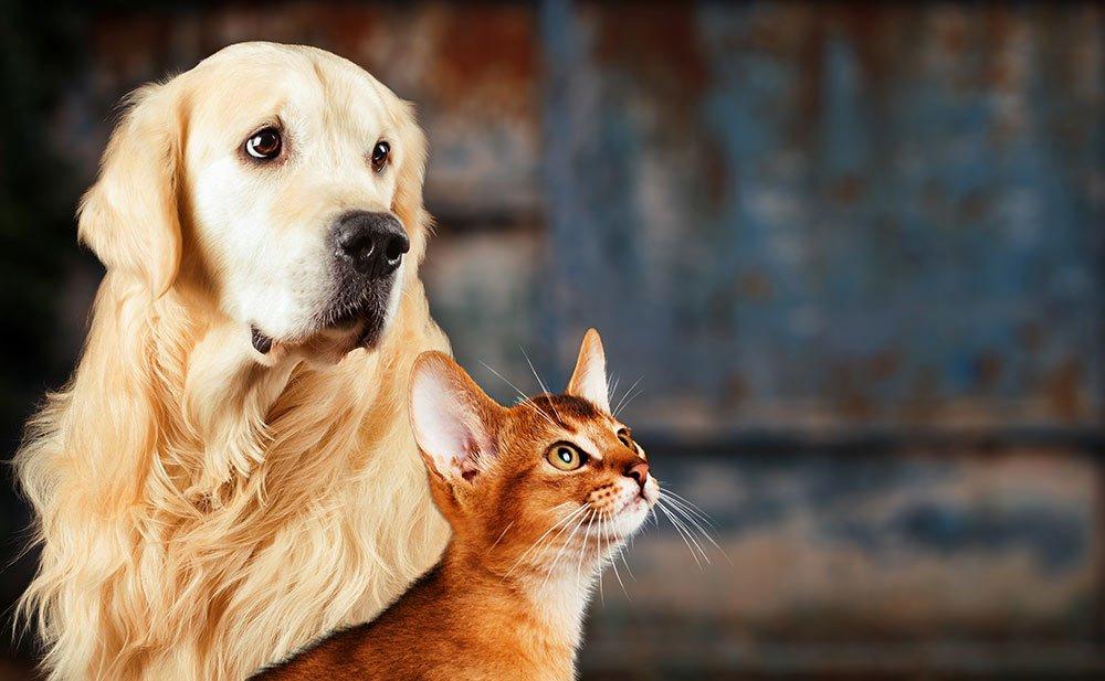 Accidentes de mascotas