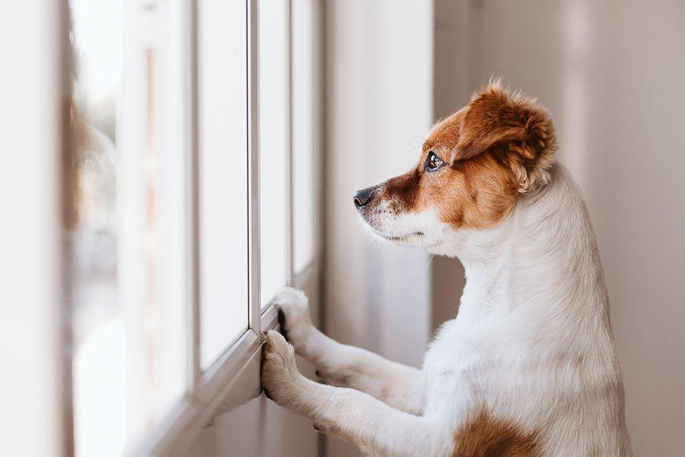 perros en albacete