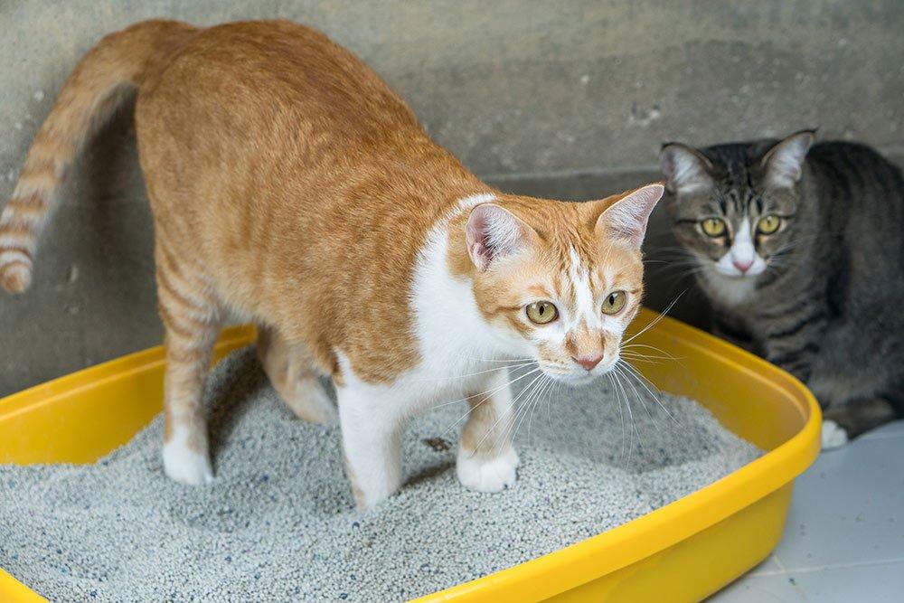 Arena para gatos   Veterinario Argos