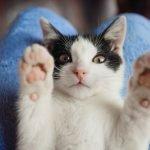 ¿Cómo detectar el estrés en tu gato?