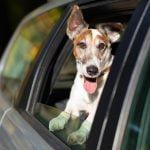 Cómo evitar los mareos de tu perro en los viajes por carretera