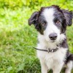 ¿Qué es la piometra en las hembras de perro?