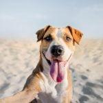 Disfruta del verano yendo a una playa apta para tu perro