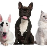 Claves para mejorar la convivencia entre perros y gatos