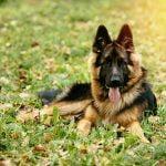 ¿Qué es la displasia que pueden sufrir los perros?