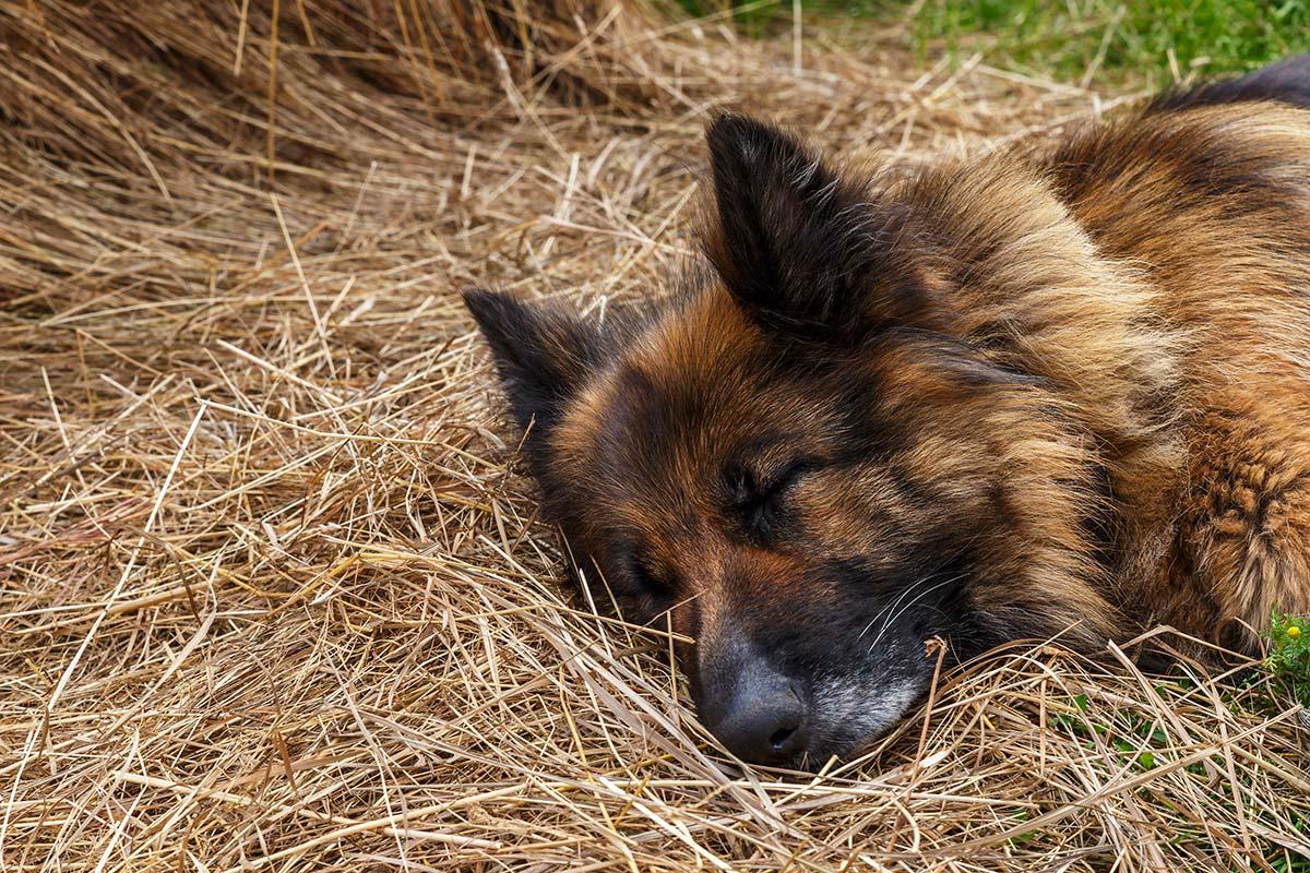 Displasia perros en Albacete