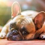Te informamos sobre la diabetes canina