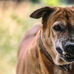 enfermedad rabia perros