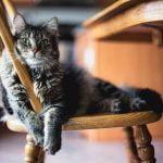 5 enfermedades habituales en los gatos