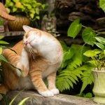 Cómo saber si nuestra mascota tiene parásitos