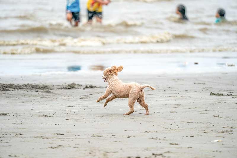 actividad física perros