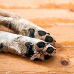 La solución a las heridas y problemas en las almohadillas de los perros